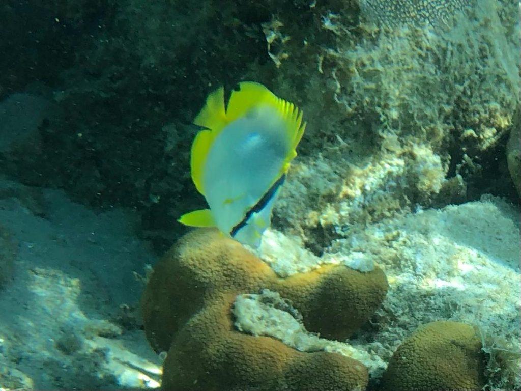 Belize-Guide-Co-snorkel–coral