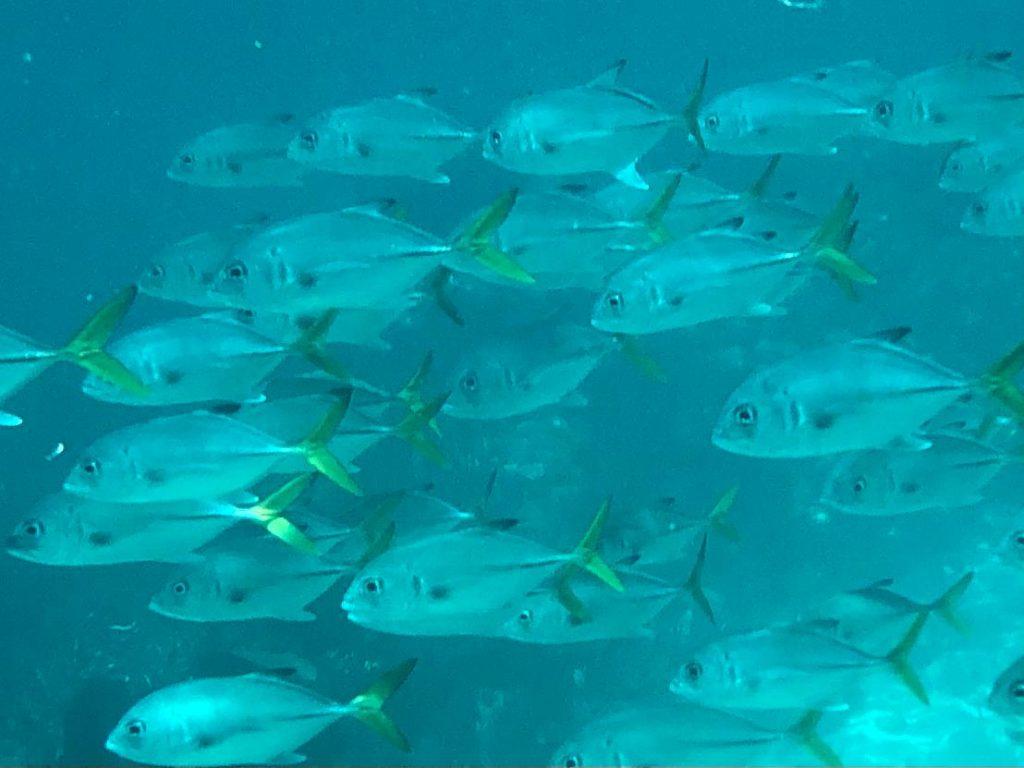 Belize-Guide-Co-snorkel-coral_